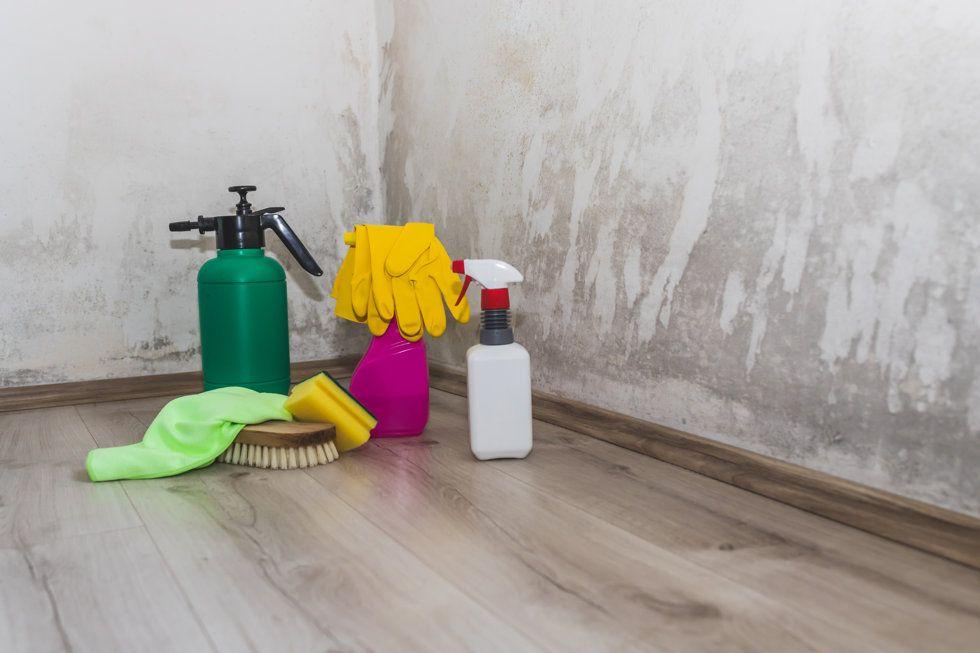 Productos para quitar el moho de las paredes
